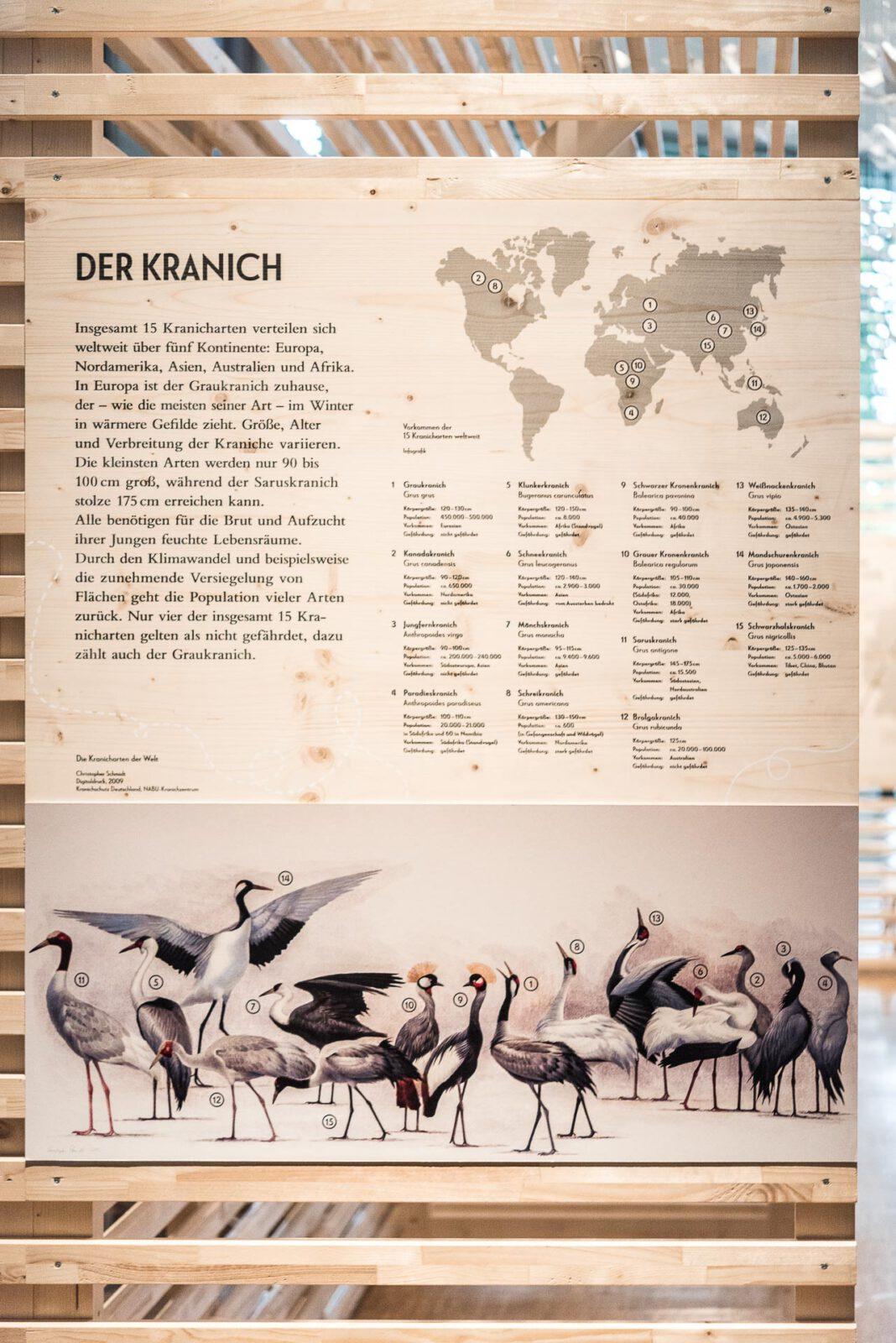 3_M_Kraniche_Schloss-Homburg_BOKG_02-11-2018_MFN1789