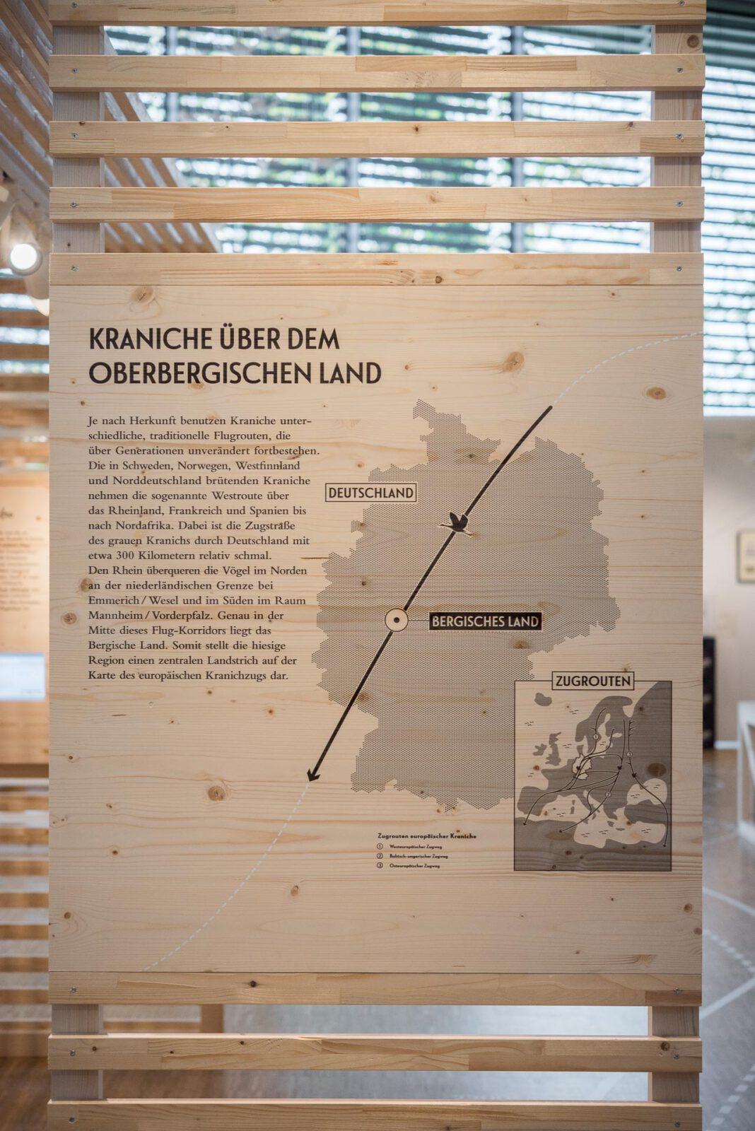 3_M_Kraniche_Schloss-Homburg_BOKG_02-11-2018_MFN1877