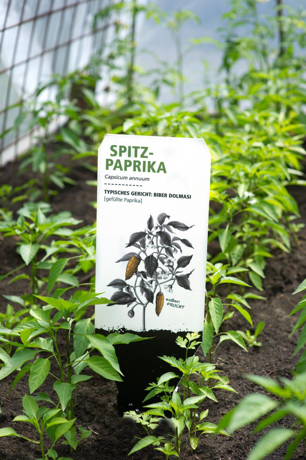 2_S_DSC5664_Spitzpaprika